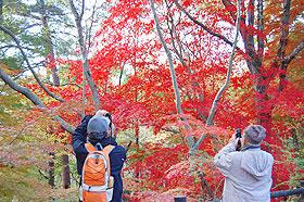 森林植物園紅葉散策